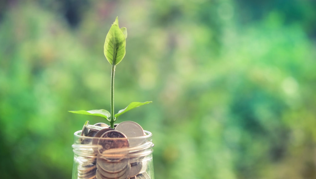 Plant Growing in Money Pot - Invest in Good Web Design